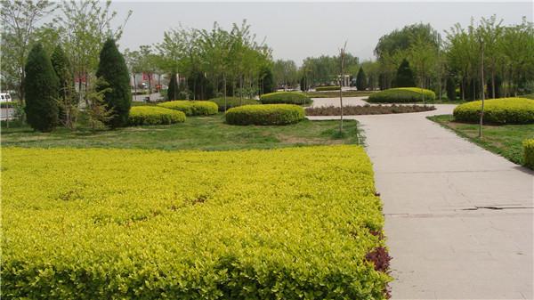 壁纸 成片种植 风景 植物 种植基地 桌面 600_337